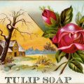 free victorian clip art tulip soap with roses trade card vintage ephemera
