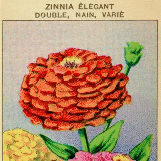 French Seed Packet Label Zinnia Free Vintage Clipart