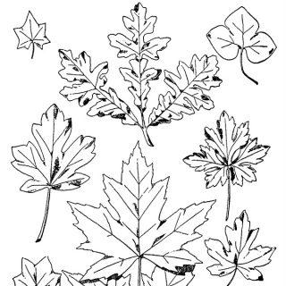 Various Leaves Free Vintage Clip Art