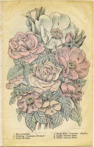 Free Vintage Roses Clip Art