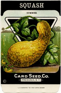Free vintage clip art squash seed packet