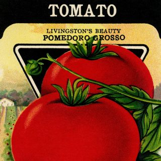Free vintage clip art tomato seed packet