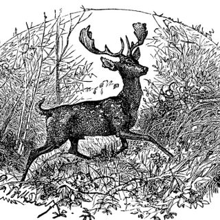 free vintage printable black and white deer illustration