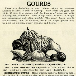 vintage gourd clip art illustration
