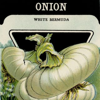 Card Seed Co onion seed packet free vintage clip art