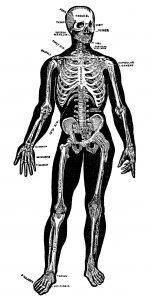 Free vintage skeleton clip art