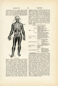 Vintage aged book page skeleton free clip art