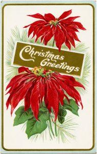 free vintage poinsettia postcard image