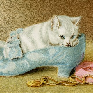 free vintage kitten in shoe clip art illustration