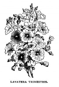 Free vintage bouquet of flowers black white clip art illustration