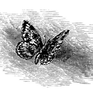 Free Vintage Butterfly Illustration