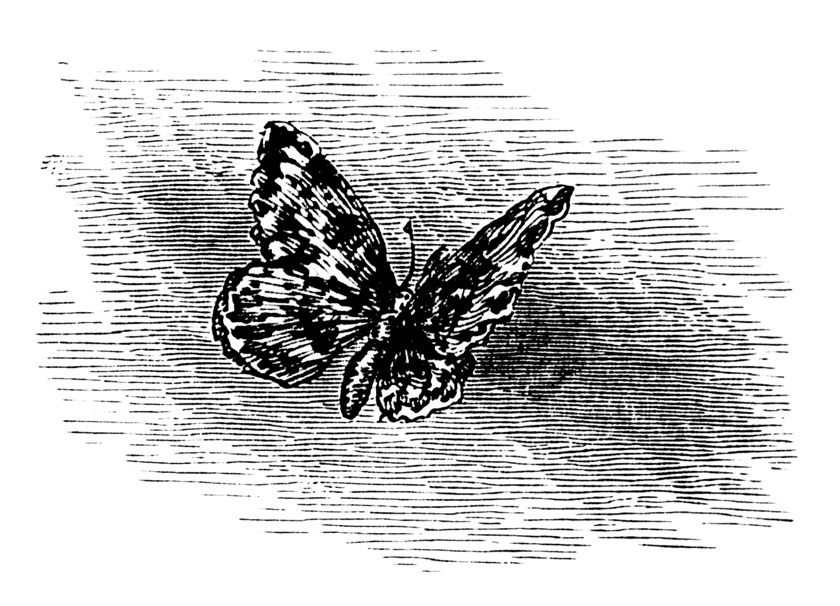 Free Vintage Printable Butterfly Black White Clip Art Illustration