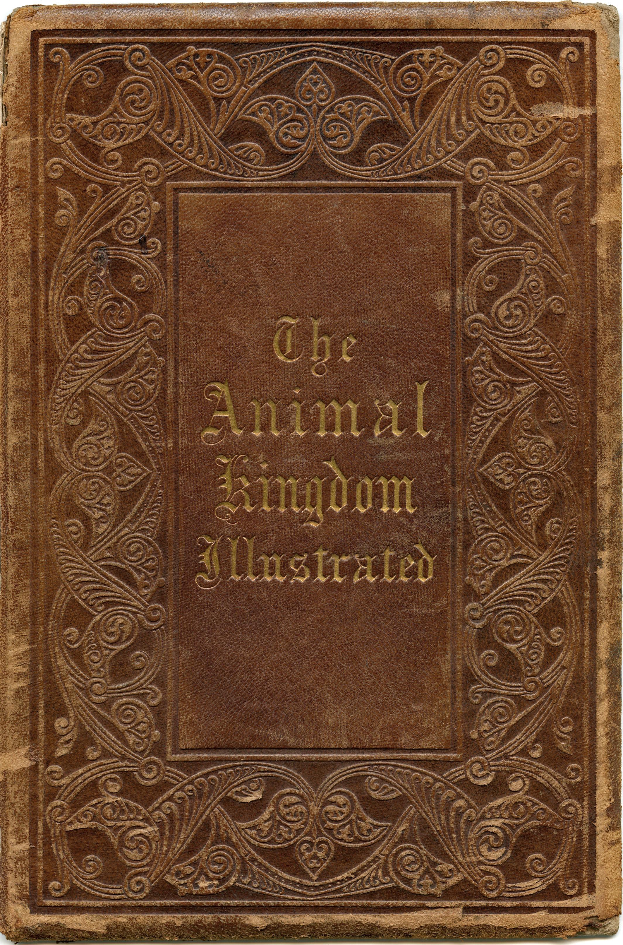 Vintage Book Cover Animal Kingdom