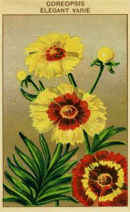 Free vintage French seed packet flower label