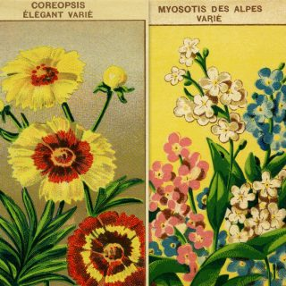 Vintage French Seed Packet Flower Labels