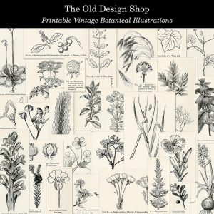 Botanical illustrations digital download preview