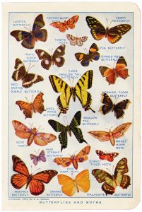 Free vintage butterflies and moths illustrated book page