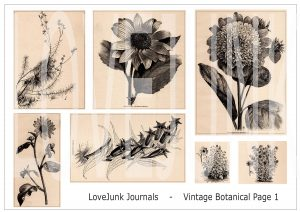 Tracie Fox vintage botanical digital kit