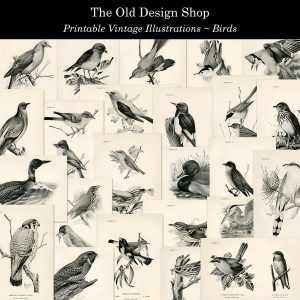printable vintage bird illustrations