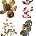 Free vintage botanical illustrations