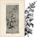 Free vintage autumn leaf design clip art illustration