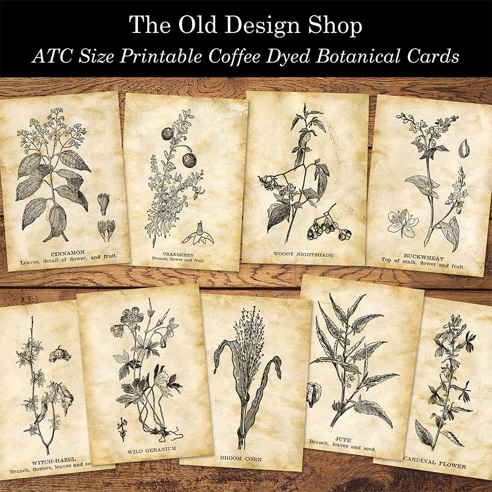 printable coffee dyed botanical ATC cards