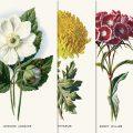Free printable vintage flower illustration