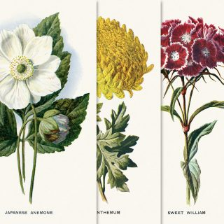 Free printable vintage flower illustration