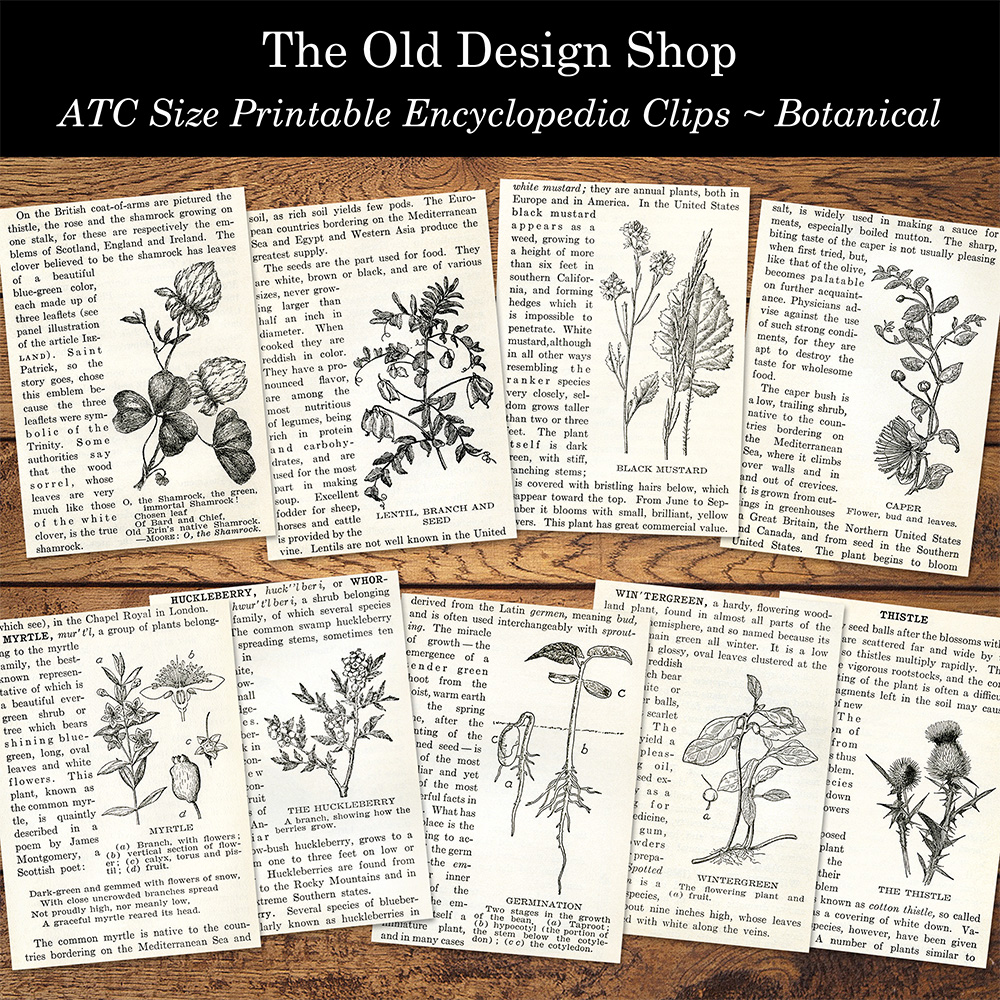 printable botanical encyclopedia clip