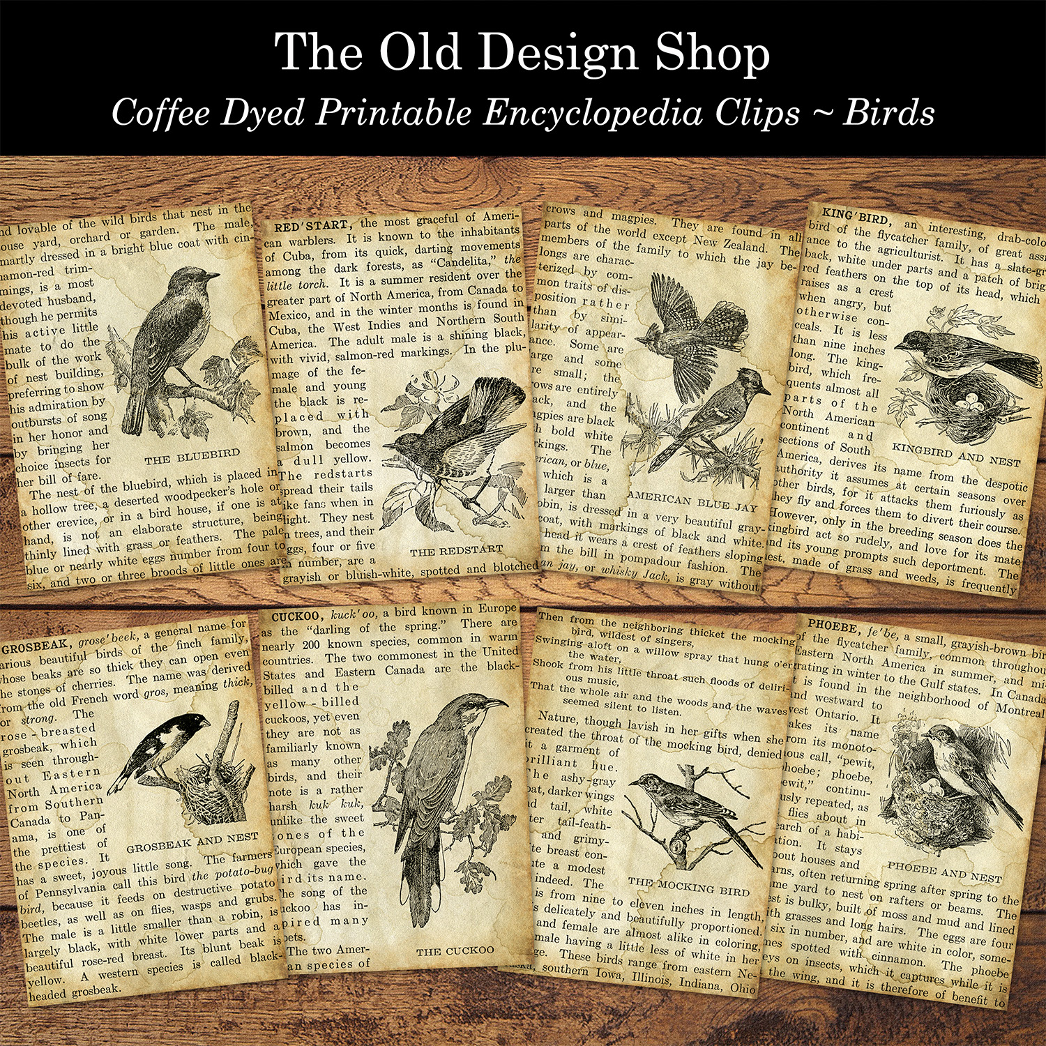 coffee dyed printable encyclopedia clippings ATC size bird cards