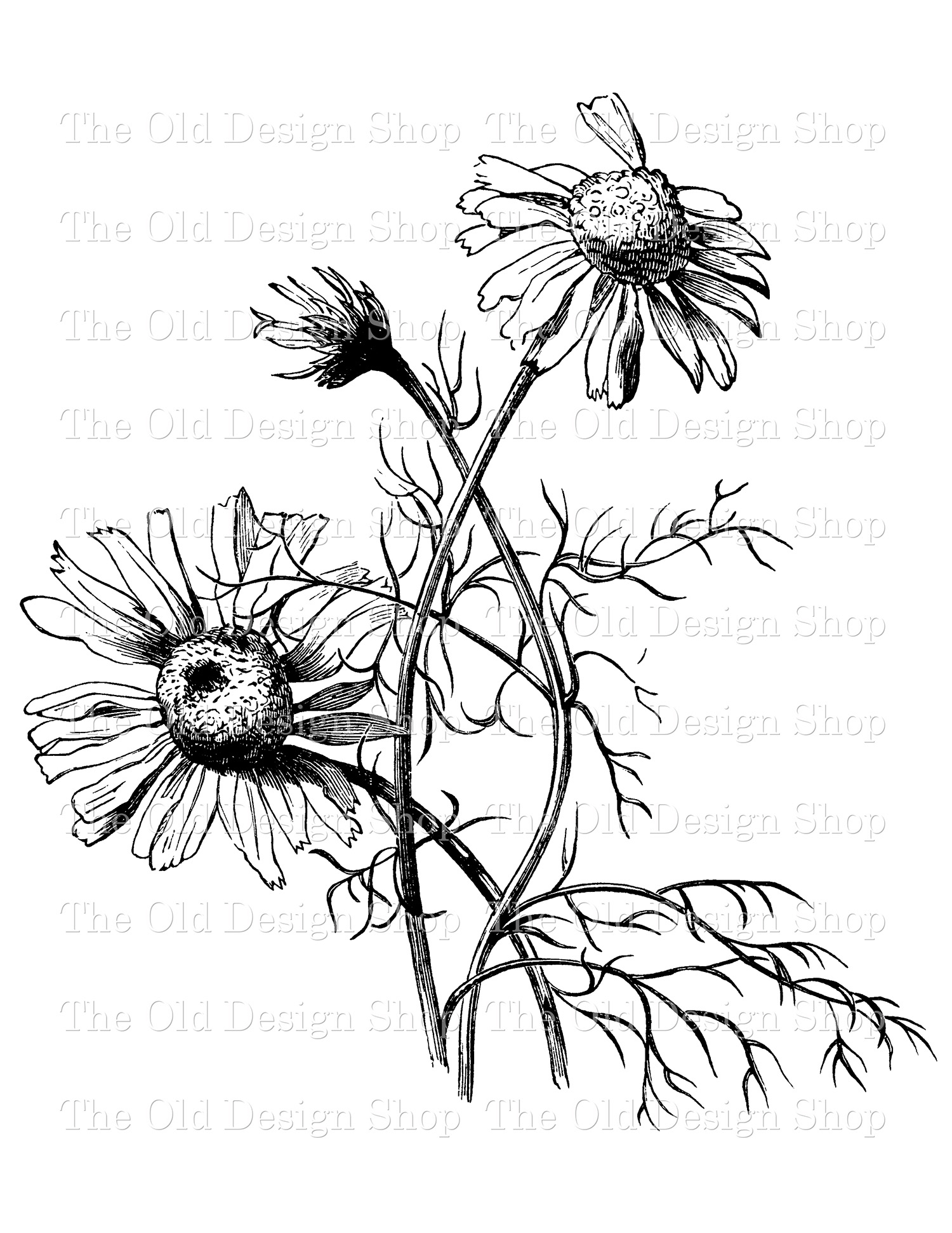 mayweed digital stamp transfer image clip art