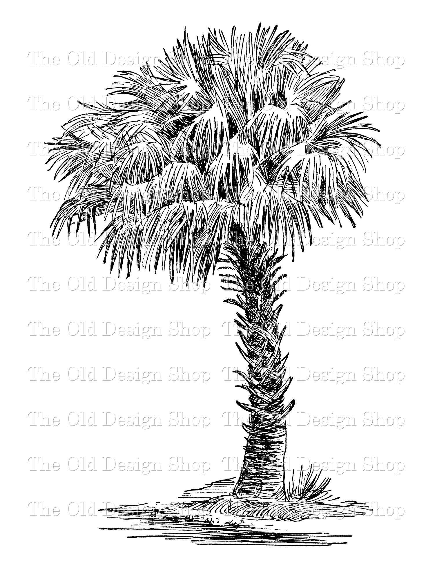cabbage palmetto clip art digital stamp transfer image