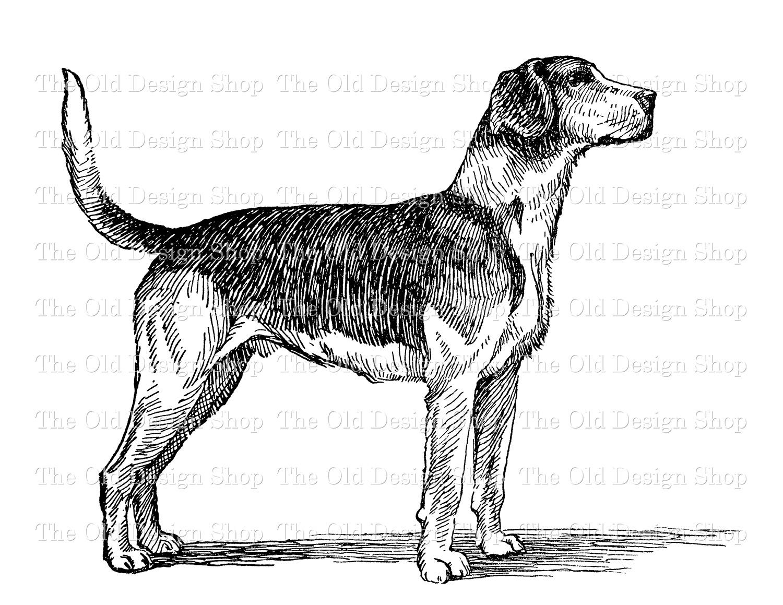 foxhound dog clip art digital stamp transfer image