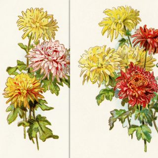 free printable vintage floral illustrations clip art image