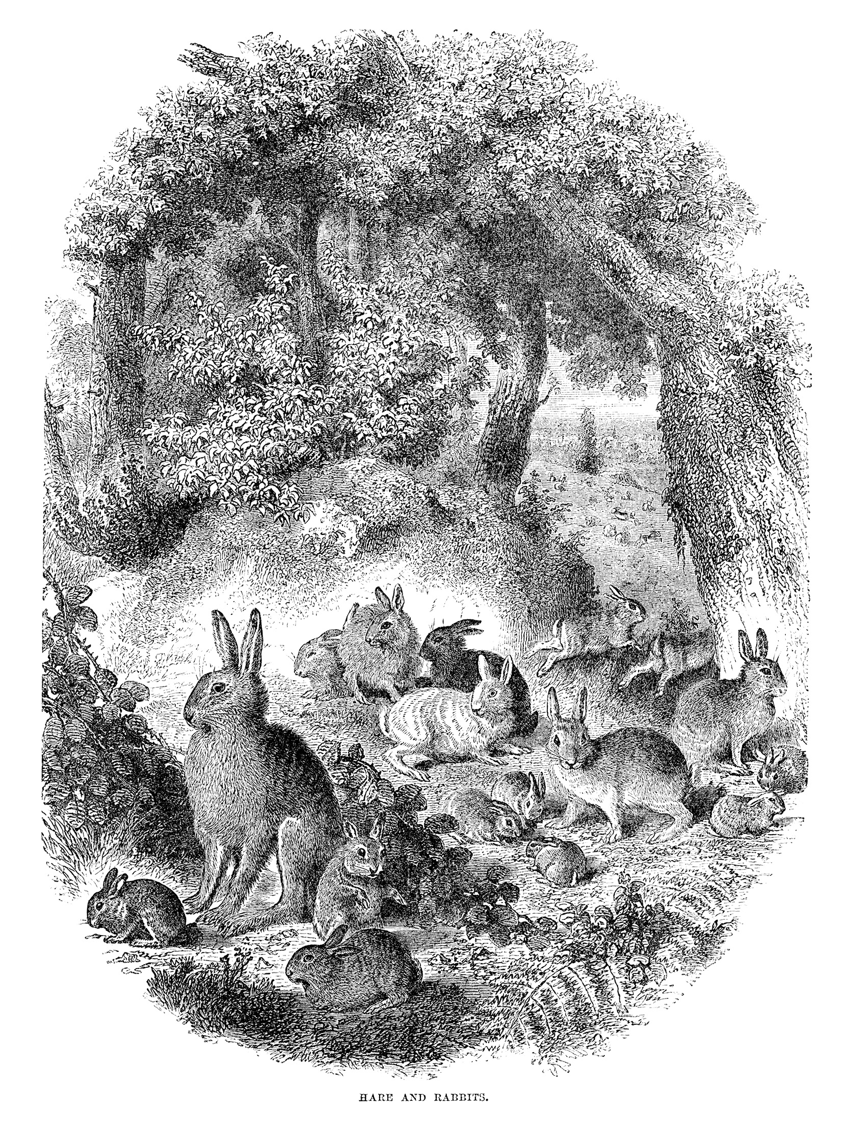 hare and rabbits free vintage printable illustration