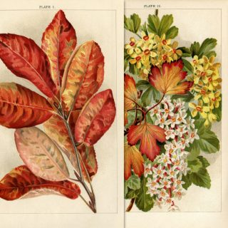 autumn botanical printable book plate