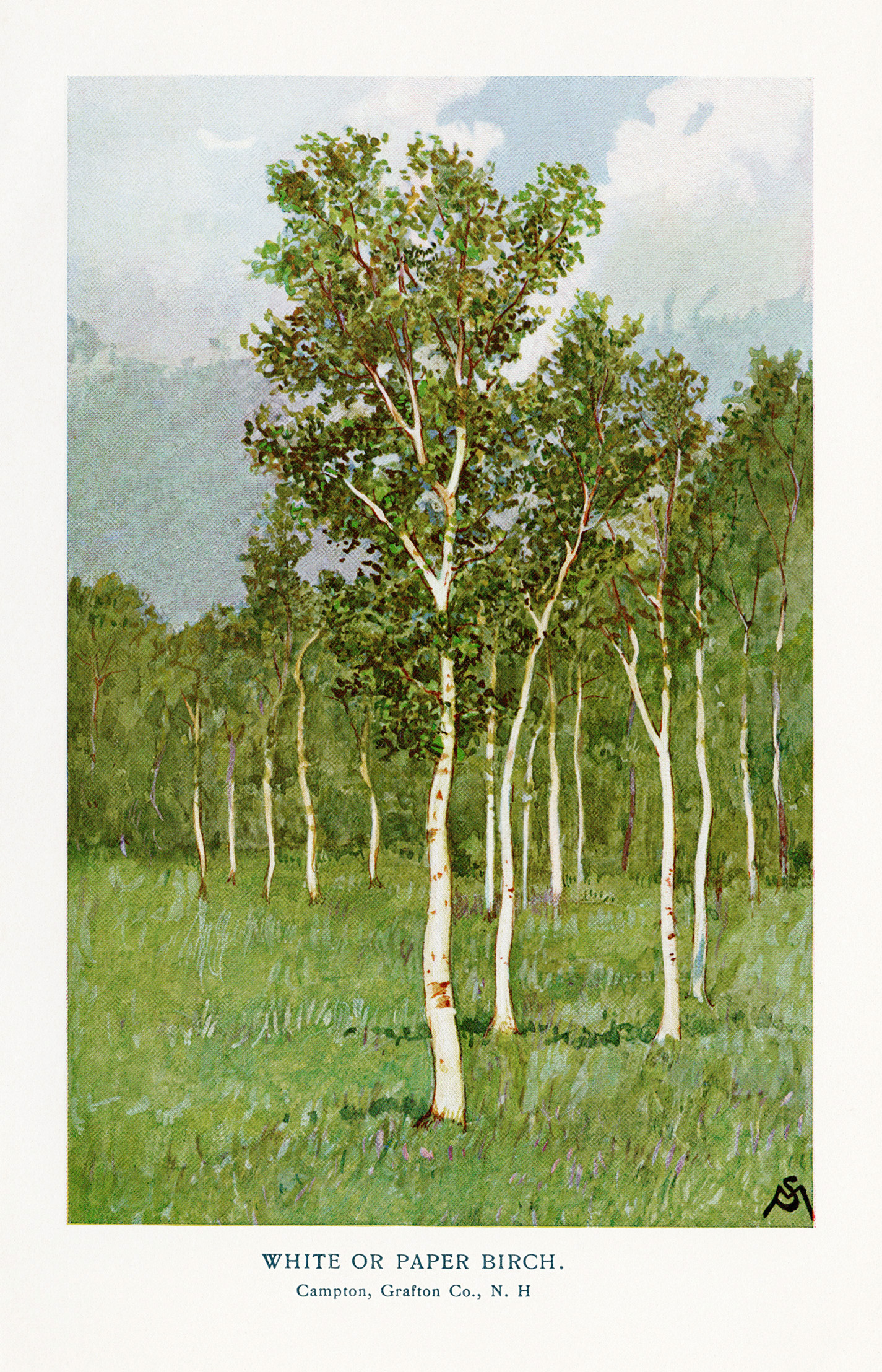 free clip art vintage tree illustrations
