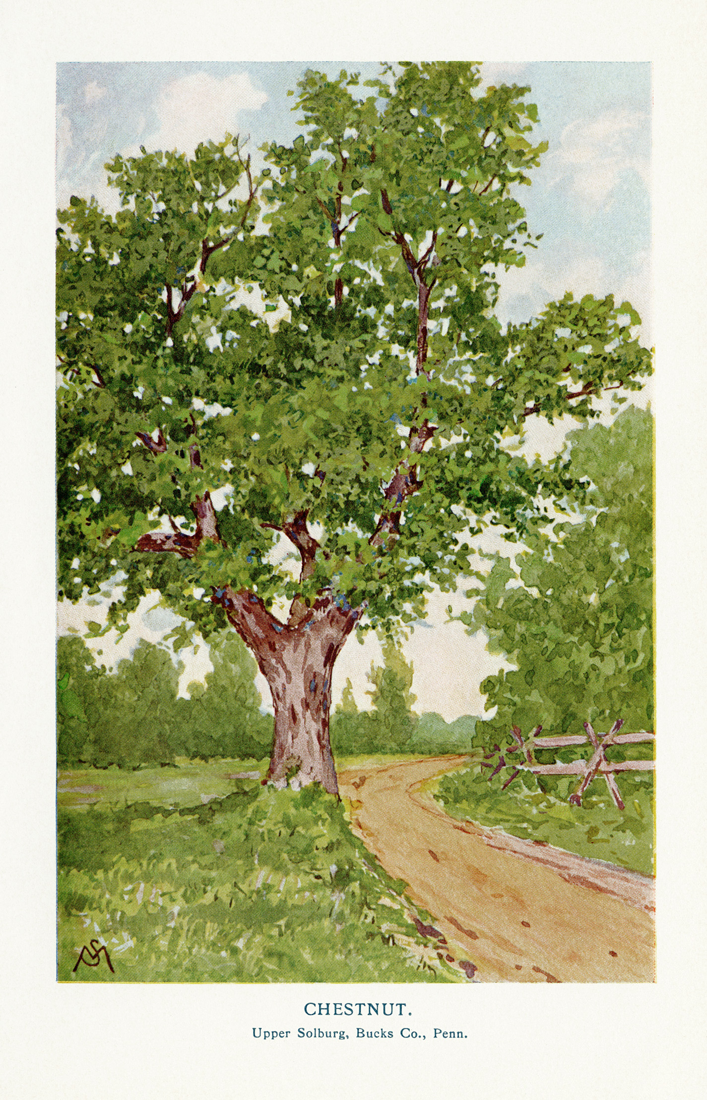 free clip art vintage tree illustrations
