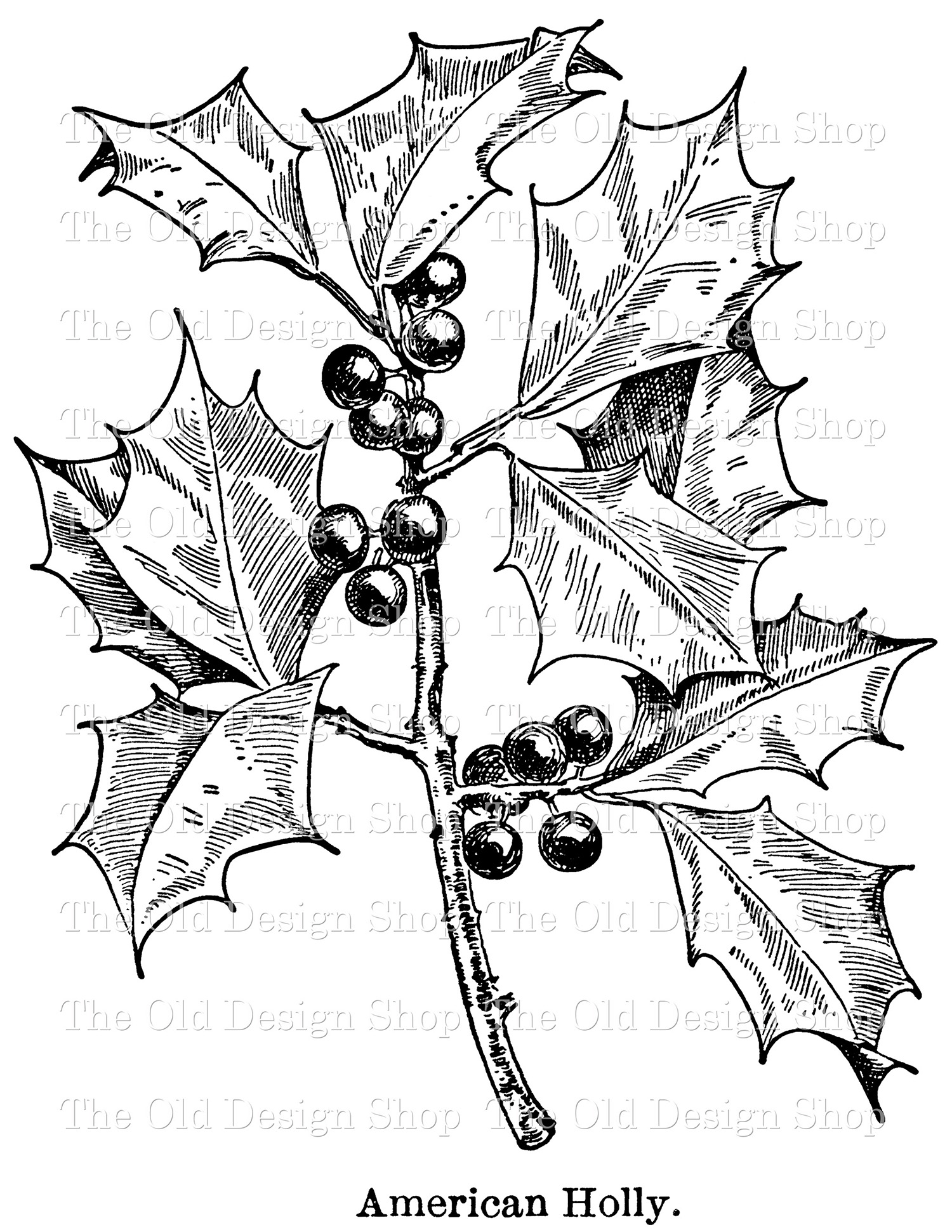 holly and berries leaf clip art