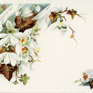 fall colored leaves white flowers vintage postcard