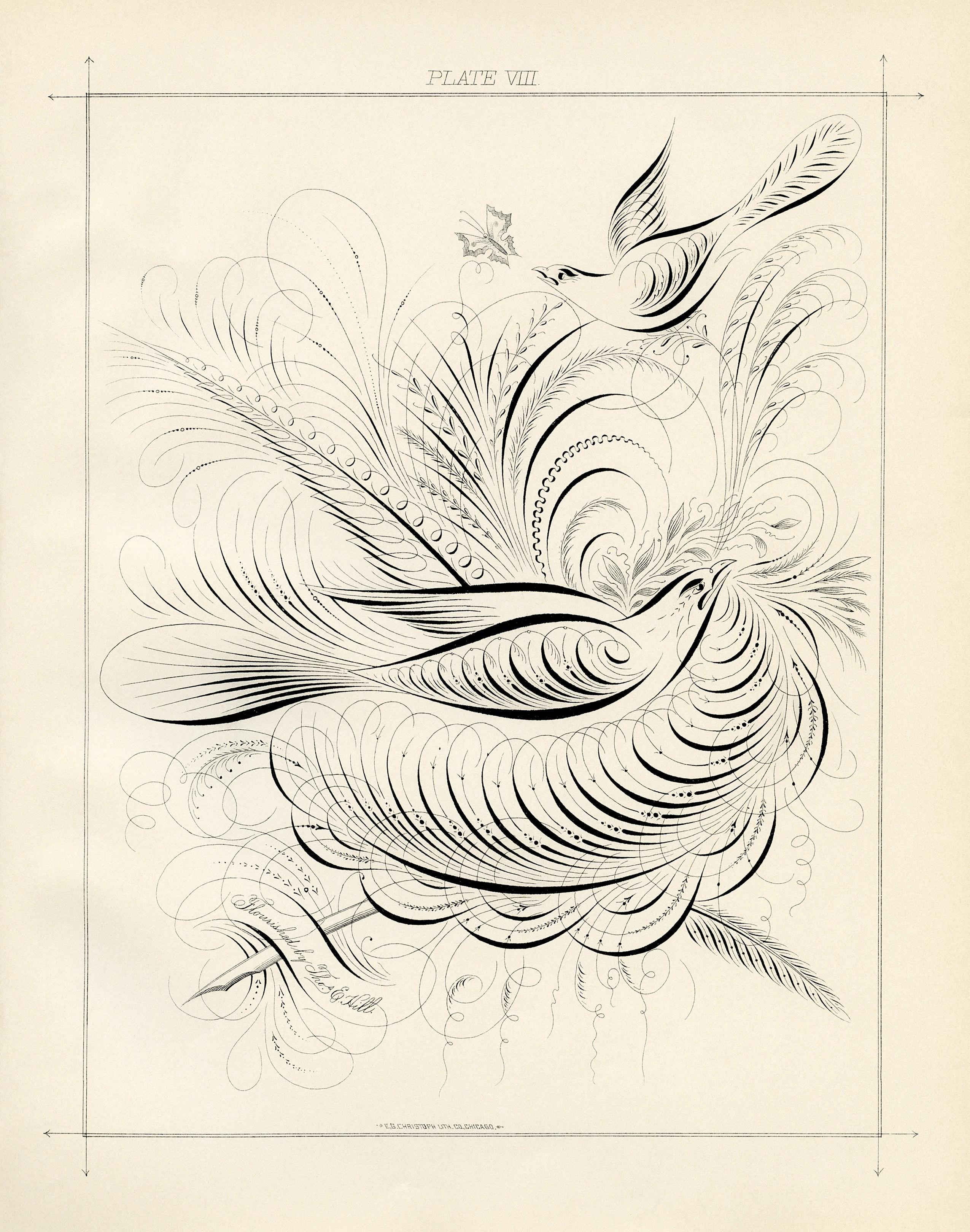 birds and swirls printable Spencerian bird