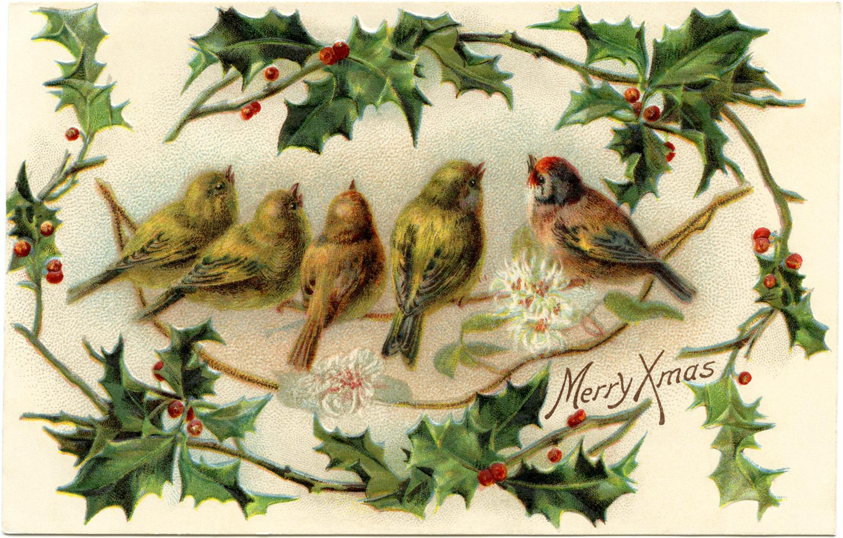 vintage Christmas bird postcard free clip art