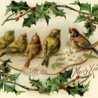 vintage Christmas bird postcard free clip art