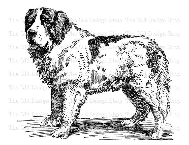 St Bernard dog clip art png file digital stamp