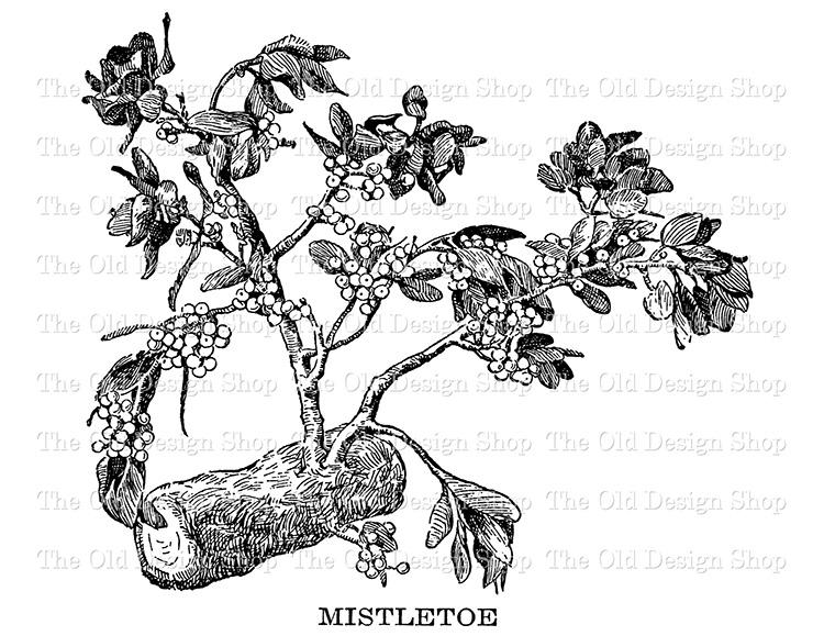 mistletoe clip art png file digital stamp