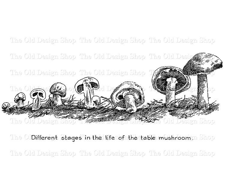 table mushroom clip art png file digital stamp
