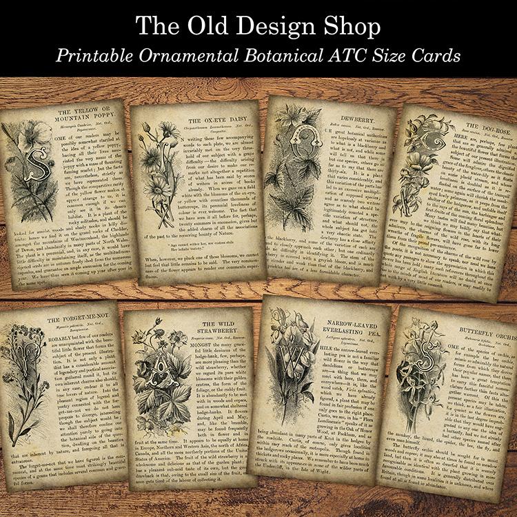 printable ornamental botanical atc size cards
