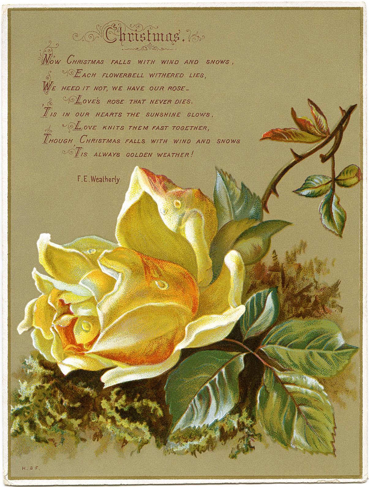 antique Christmas rose card free clip art