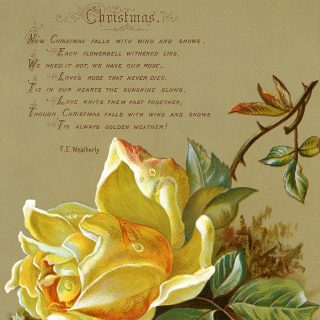 antique Christmas rose card free clip art