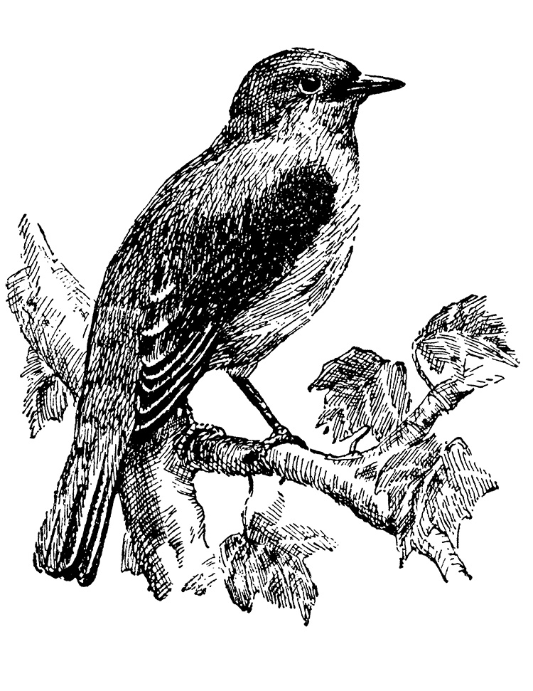digital stamp transfer image bluebird